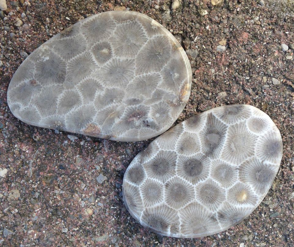 Why Lake Michigan's high water levels make finding Petoskey stones easeir