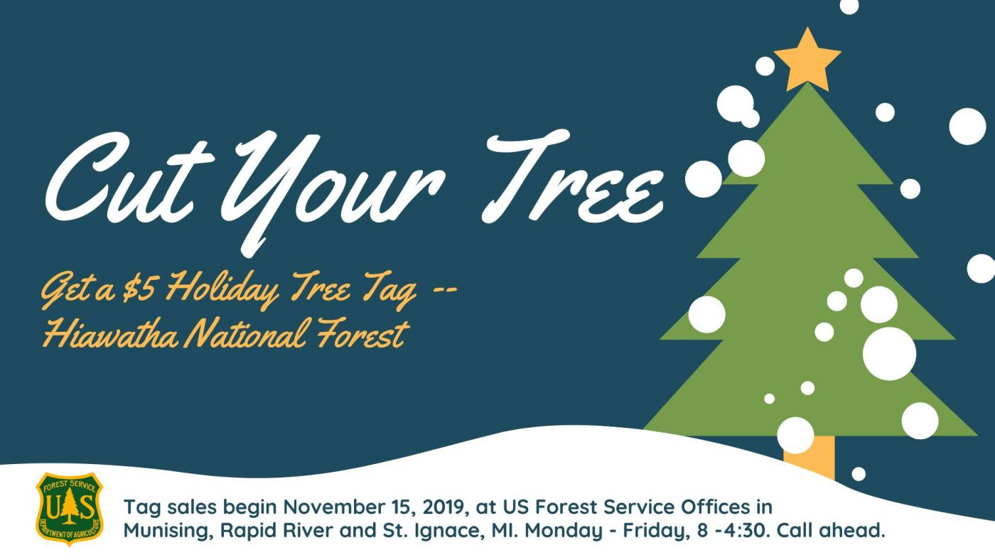 Cut your own $5 Christmas tree from a Michigan national forest