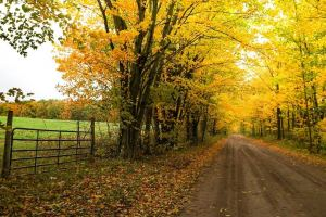 a tree-lined 'country lane' in Ludington, MI
