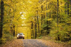 car drives on road through fall leaves