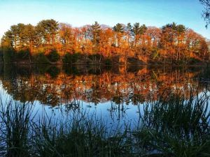 looking across a lake at trees turning fall colors