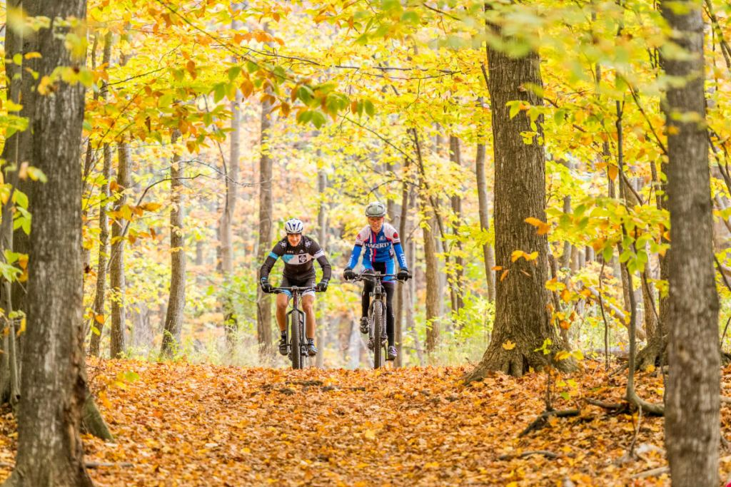 two people cycle through an autumnal tunnel of trees