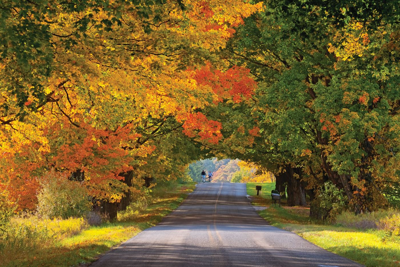a road through an autumnal tunnel of trees