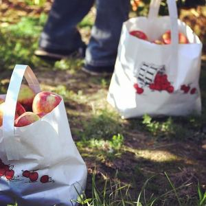 bags of apples from an apple orchard