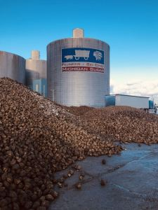 piles of sugarbeets at a Michigan Sugar Company processing plant