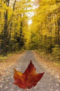 a autumn leaf held up in front of a fall tree lined road
