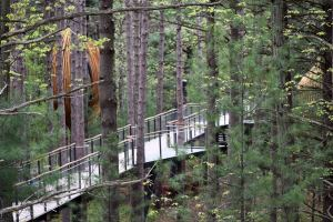 The 1,400-foot canopy walk at Whiting Forest of Dow Gardens is the longest of its kind in the country.